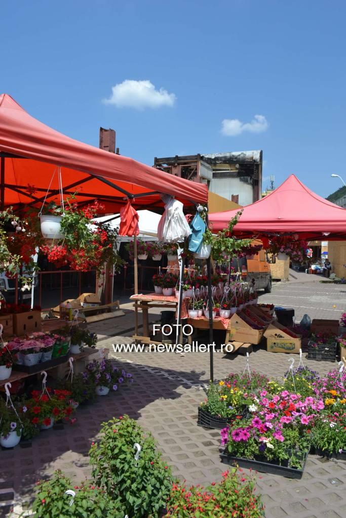 Flori și păsări pe ruinele arse ale Pieței Centrale din Piatra Neamț!
