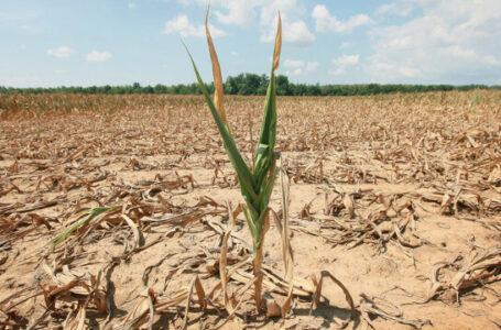 Peste 50.000 de hectare de terenuri agricole din Neamţ au fost afectate de secetă