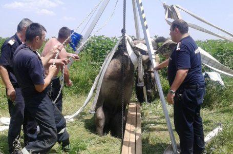 Pompierii au salvat un cal dintr-un puț la Alexandru cel Bun