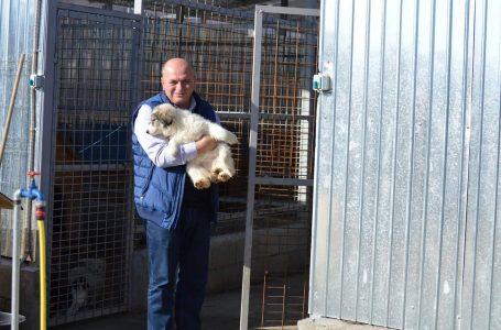 Anunțul pe care l-a făcut primarul Dragoş Chitic despre câinii comunitari