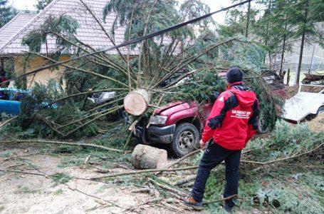 Autospecialele Salvamont Neamț au fost distruse de un brad imens care a căzut peste ele!