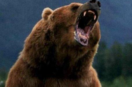 Bărbat atacat de urs la vânătoare, în zona Almaş