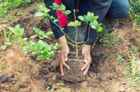 Direcția Silvică Neamț va planta peste un milion de puieți în această primăvară