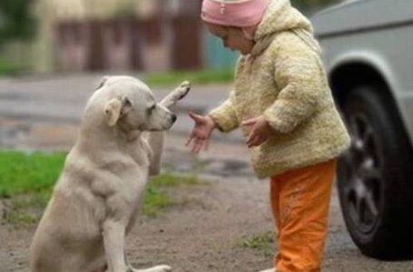 Sterilizări gratuite ale câinilor din Piatra-Neamț