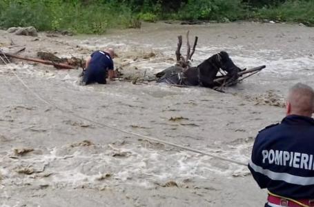 Căruță cu cai căzută în râul Bistrița, la Piatra-Neamț