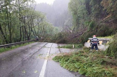 Copaci doborâți pe stradă și localități fără energie electrică în urma furtunii de vineri seara din Neamț