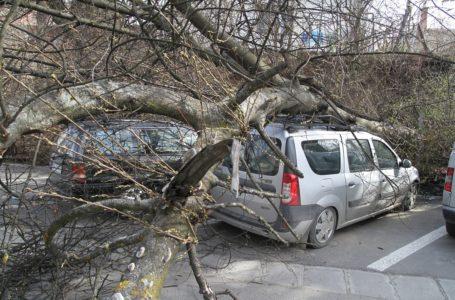 Copac căzut peste 2 mașini în Piatra-Neamț, în cartierul Mărăței