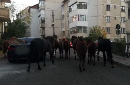 Vestul Sălbatic în centrul municipiului Piatra-Neamț (video)