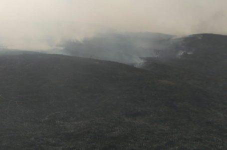 Incendiu pe 50 de hectare de teren la Petricani