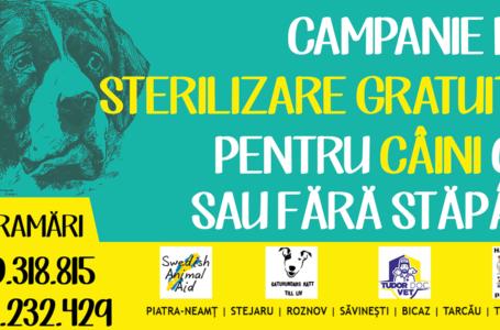 O nouă campanie de sterilizare gratuită a câinilor cu sau fără stăpân din județul Neamț
