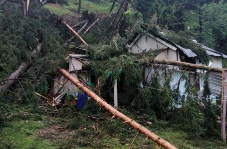 Copaci căzuți peste o casă și 2 anexe ale unei bătrâne de 89 ani din Bistrița – Alexandru cel Bun