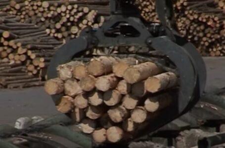 Informații explozive! Mafia lemnului din Ocolul Silvic Tazlău, strâns legată de candidații PSD la locale?!