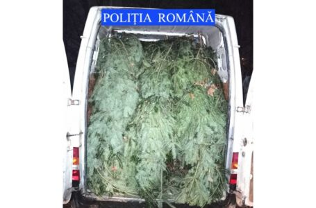 Primii pomi de Crăciun confiscați de polițiștii din Neamț