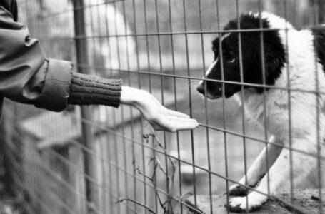 Legea protecției animalelor, modificată! Polițiștii pot emite ordin de plasare a unui animal în adăpost pentru 45 zile!