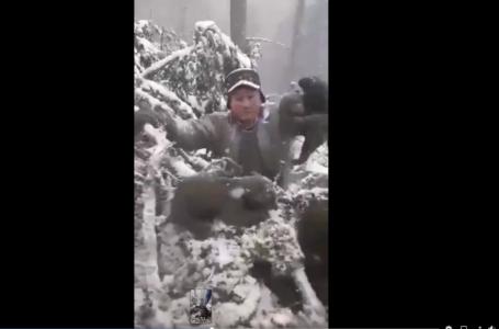 Au fost identificaţi cei care scot din bârlog 4 ursuleţi și îi aruncă în zăpadă. Sunt din judeţul Neamţ! (video)