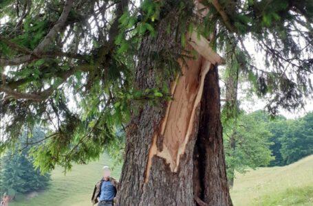 Bărbat lovit de fulger la Pângărați. A fost găsit mort sub copac. (foto)