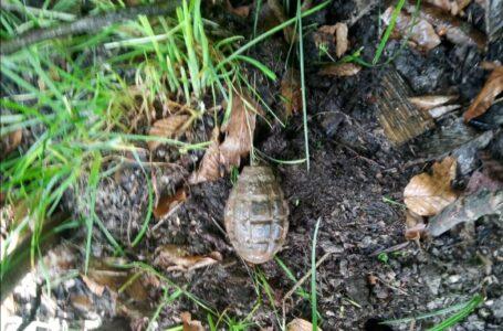 Grenadă descoperită într-o drumeţie în pădurea Bâtca Doamnei