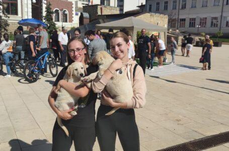 11 suflete și-au găsit un cămin la Târgul de adopții al câinilor din Piatra-Neamț