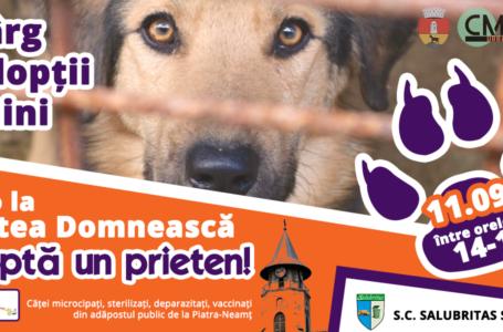 Salubritas organizează pe 11 septembrie un Târg de adopții al câinilor fără stăpân